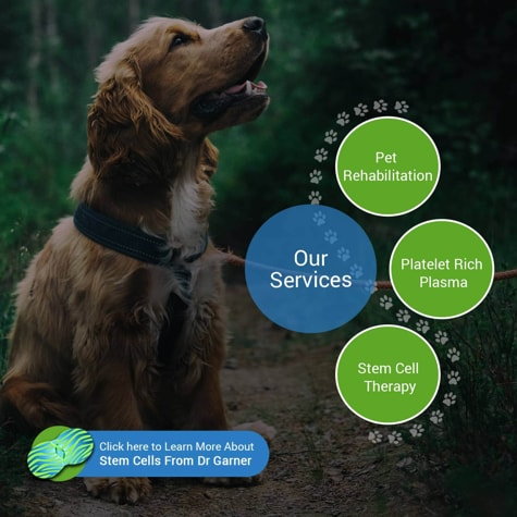 Veterinary Stem Cell Therapy - Stem Cell Safari, League City TX