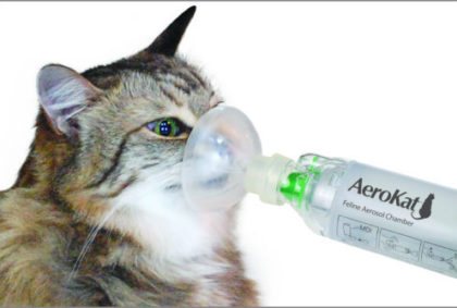 can cat have asthma