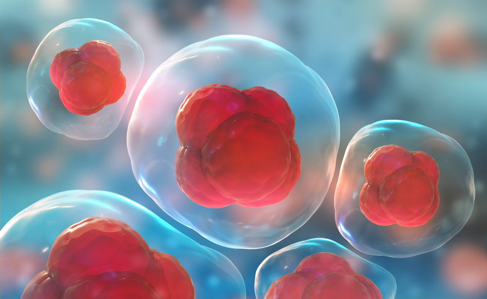 mesenchymal-stem-cells-what-are-they