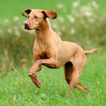 Stem cells can effectively treat acute liver failure in dogs.