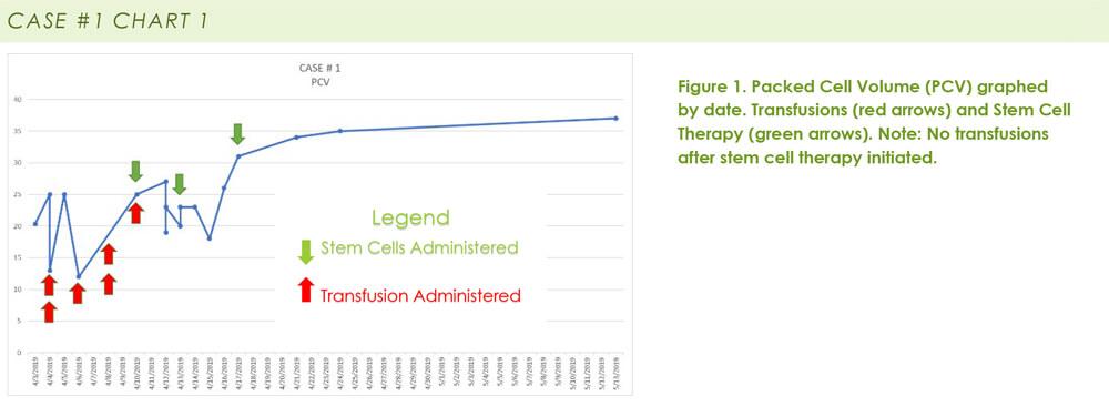 clinicalreport-immune-mediated-hemolytic-anemia-imha-stem-cells
