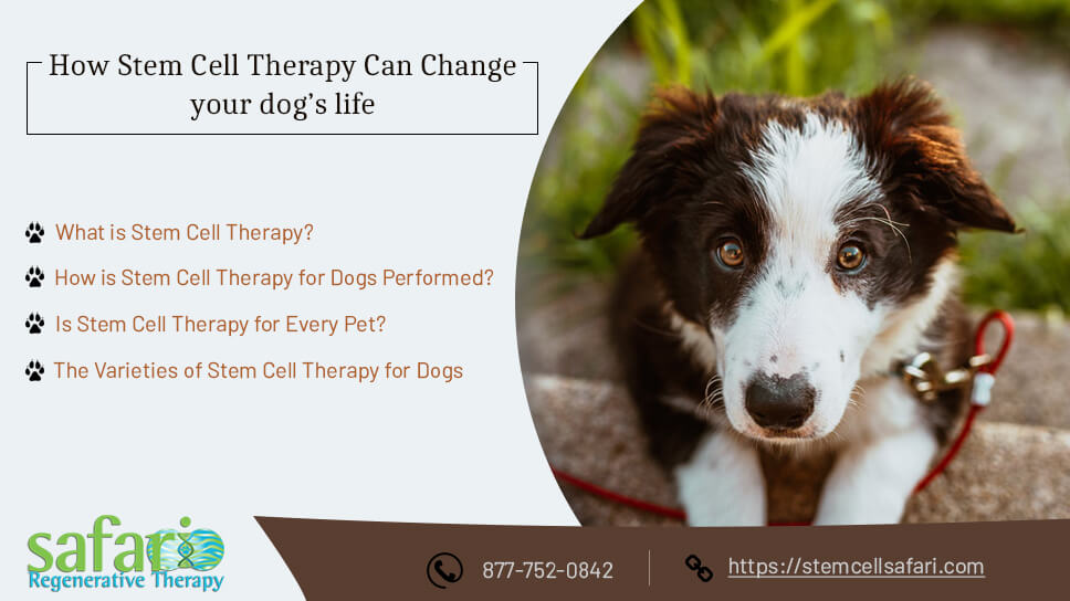 how-stem-cell-therapy-can-change-your-dogs-life