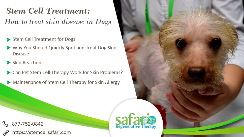 Stem Cell Treatment How To Treat Skin Disease In Dogs Stem Cell Safari