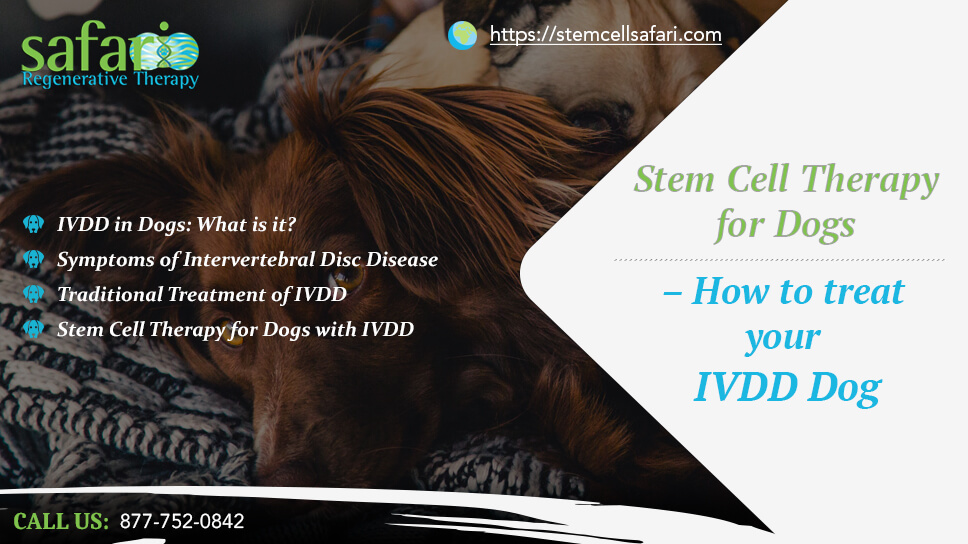 stem-cell-therapy-for-dogs-how-to-treat-your-ivdd-dog