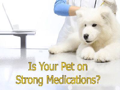 Is your pet on strong medications?