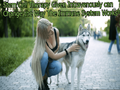 Stem Cell Therapy Given Intravenously can change the way the immune system works.