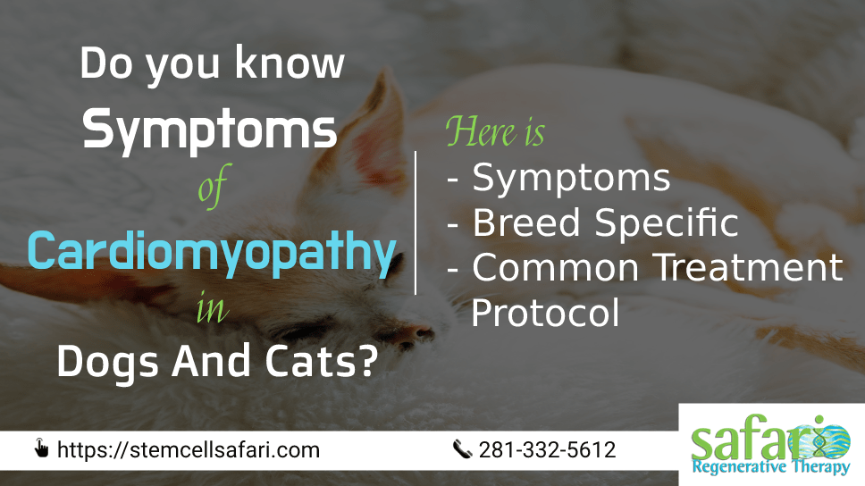 do-you-know-symptoms-of-cardiomyopathy-in-dogs-and-cats-here-is-symptoms-breed-specific-common-treatment-protocol