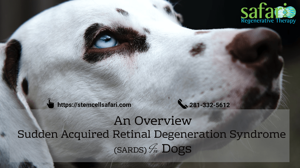 an-overview-sudden-acquired-retinal-degeneration-syndrome-sards-in-dogs