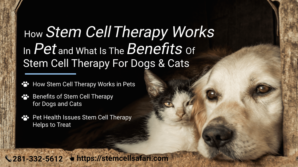 how-stem-cell-therapy-works-in-pet-and-what-is-the-benefits-of-stem-cell-therapy-for-dogs-cats