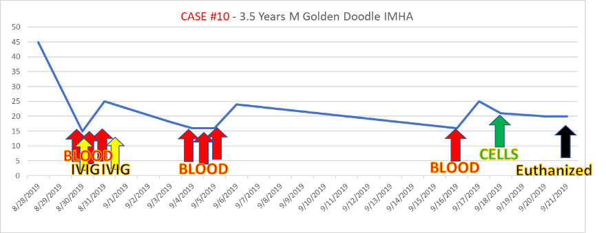 case10 3.5-year-old goldendoodle