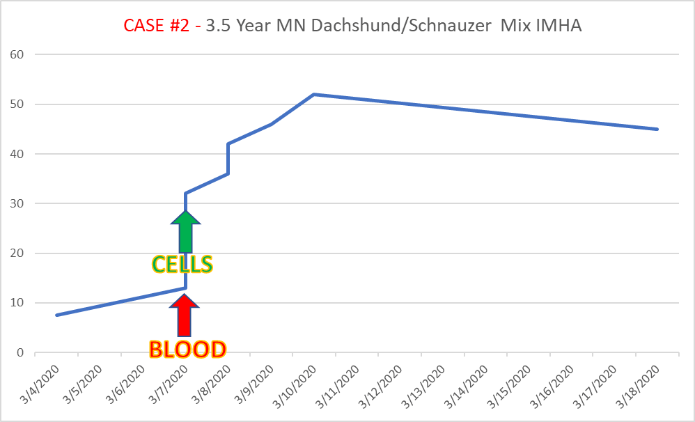 case2 3.4-year-old dachshund/schnauzer mix