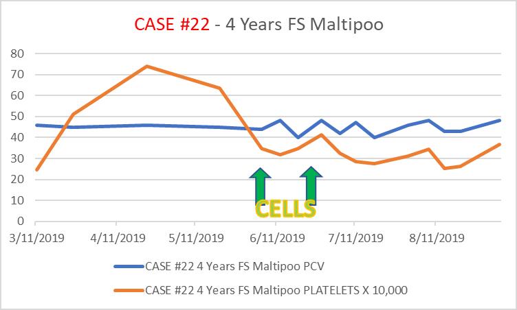 case22 4 Year old FS maltipoo diagnosed