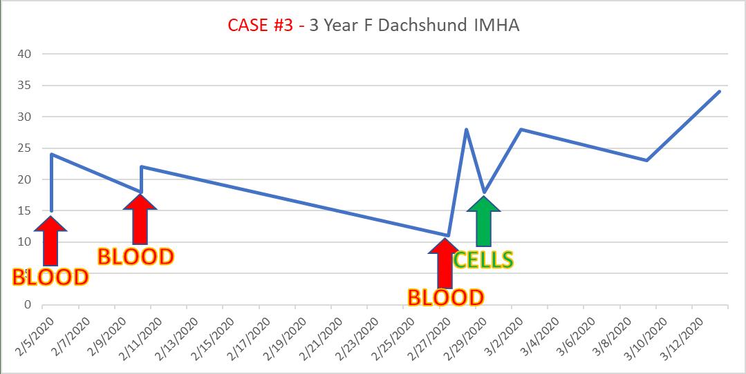 case3 3-year-old intact female Dachshund