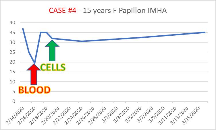 case4 5-year-old female Papillion