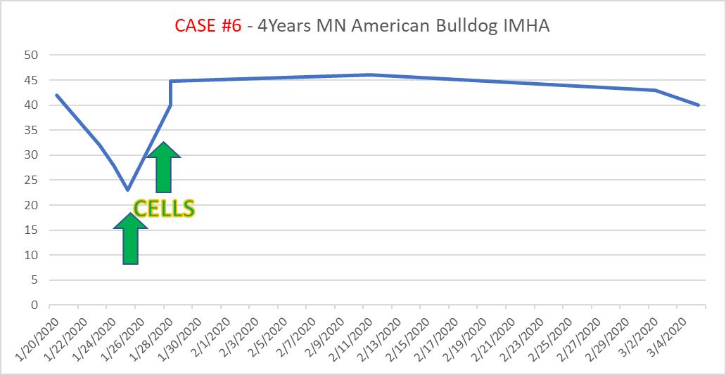 case6 4-year-old American Bulldog