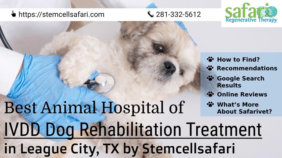 best-animal-hospital-of-ivdd-dog-rehabilitation-treatment-in-league-city-tx-by-stemcellsafari