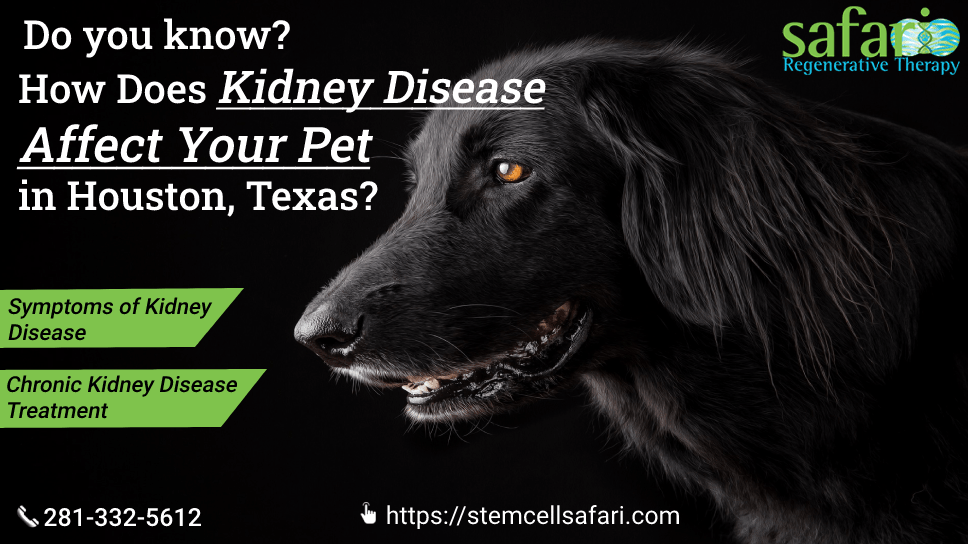 do-you-know-how-does-kidney-disease-affect-your-pet-in-houston-texas