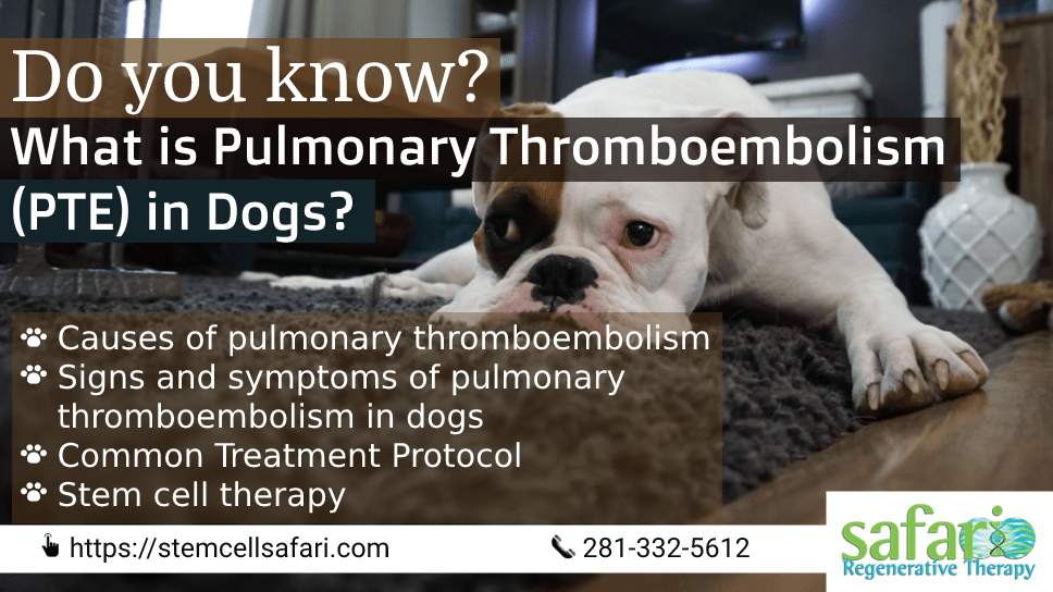do-you-know-what-is-pulmonary-thromboembolism-pte-in-dogs