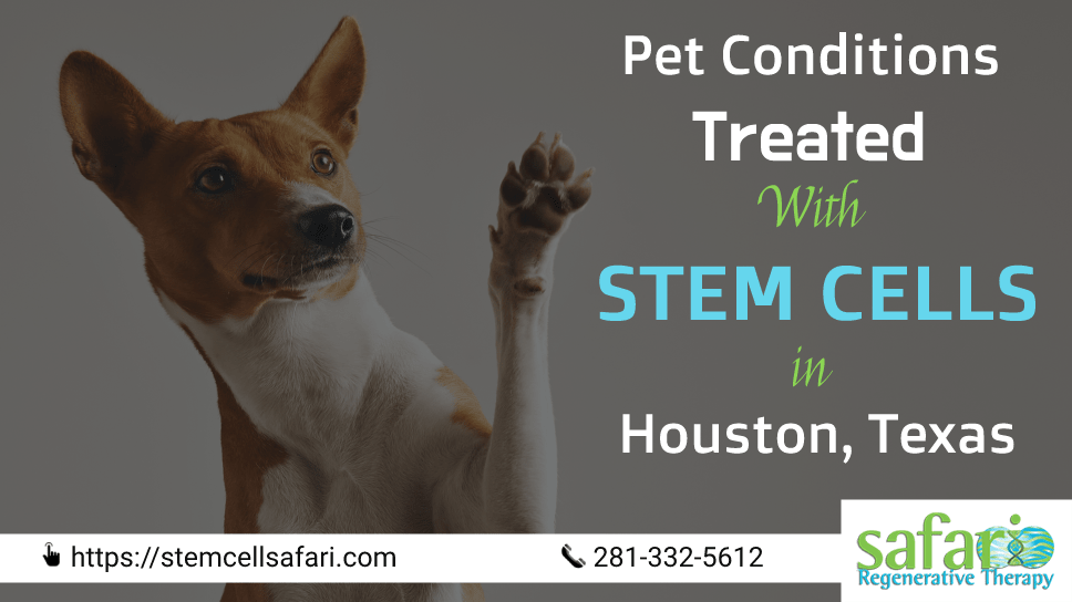 pet-conditions-treated-with-stem-cells-in-houston-texas-safari-veterinary-care-center