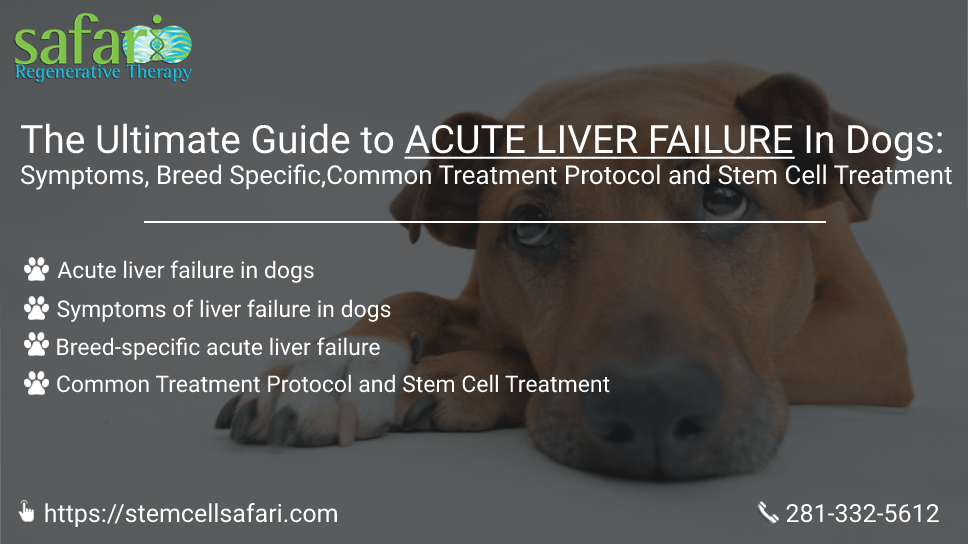 the-ultimate-guide-to-acute-liver-failure-in-dogs-symptoms-breed-specific-common-treatment-protocol-and-stem-cell-treatment