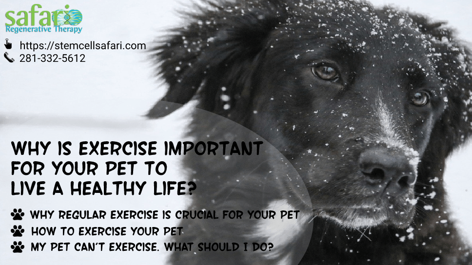 why-is-exercise-important-for-your-pet-to-live-a-healthy-life