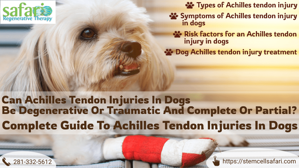 can-achilles-tendon-injuries-in-dogs-be-degenerative-or-traumatic-and-complete-or-partial-complete-guide-to-achilles-tendon-injuries-in-dogs