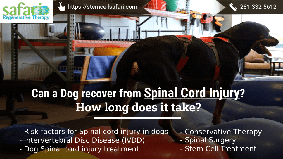can-a-dog-recover-from-spinal-cord-injury-how-long-does-it-take