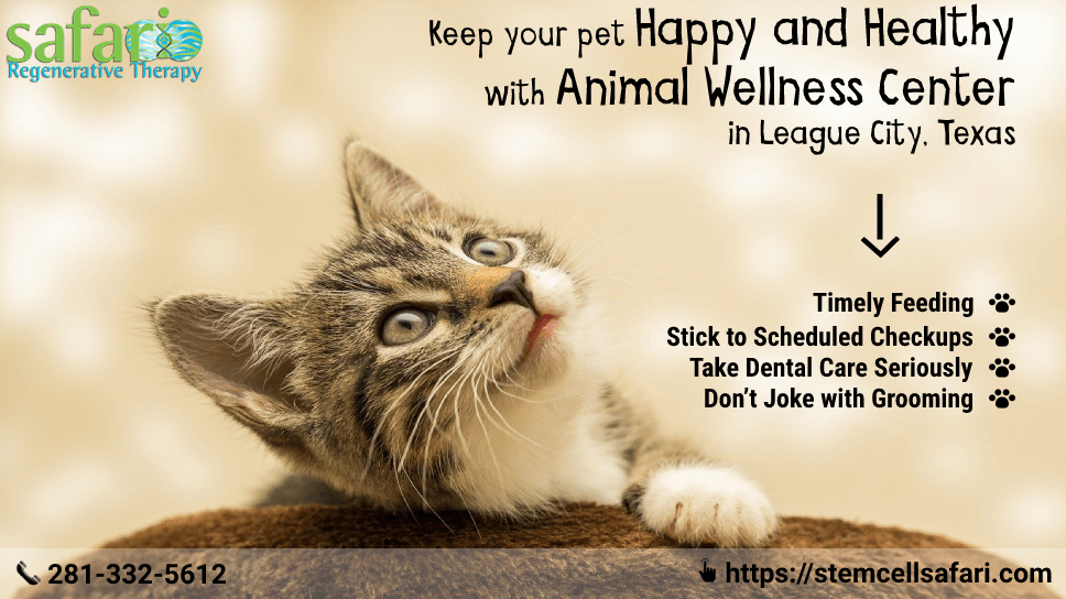 keep-your-pet-happy-and-healthy-with-animal-wellness-center-in-league-city-texas