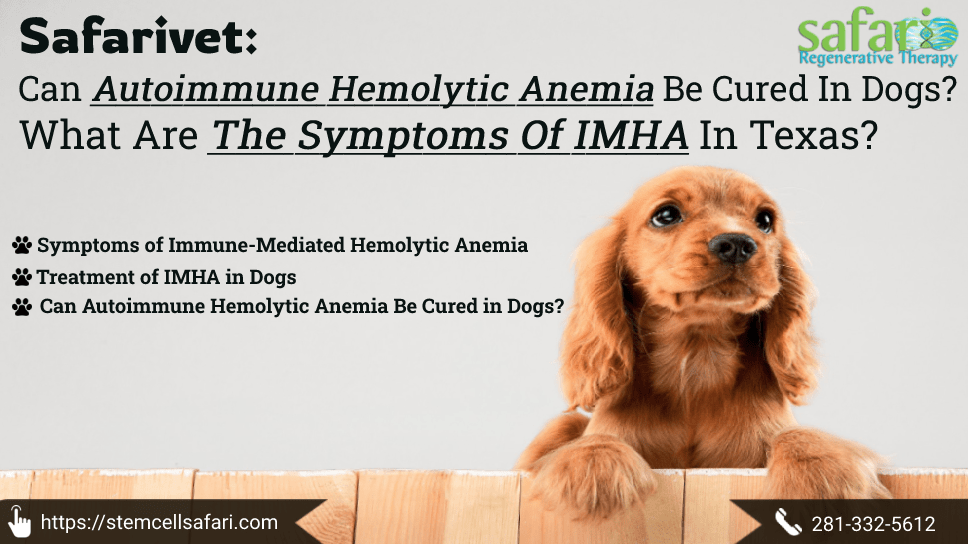 safarivet-can-autoimmune-hemolytic-anemia-be-cured-in-dogs-what-are-the-symptoms-of-imha-in-texas