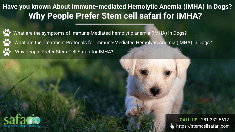 have-you-known-about-immune-mediated-hemolytic-anemia-imha-in-dogs-why-people-prefer-stem-cell-safari-for-imha