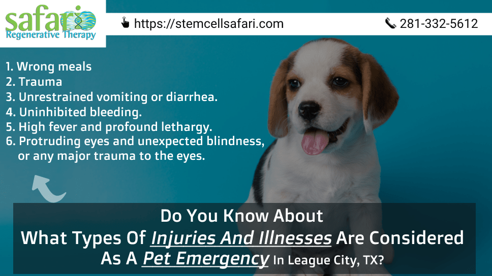 do-you-know-about-what-types-of-injuries-and-illnesses-are-considered-as-a-pet-emergency-in-league-city-tx