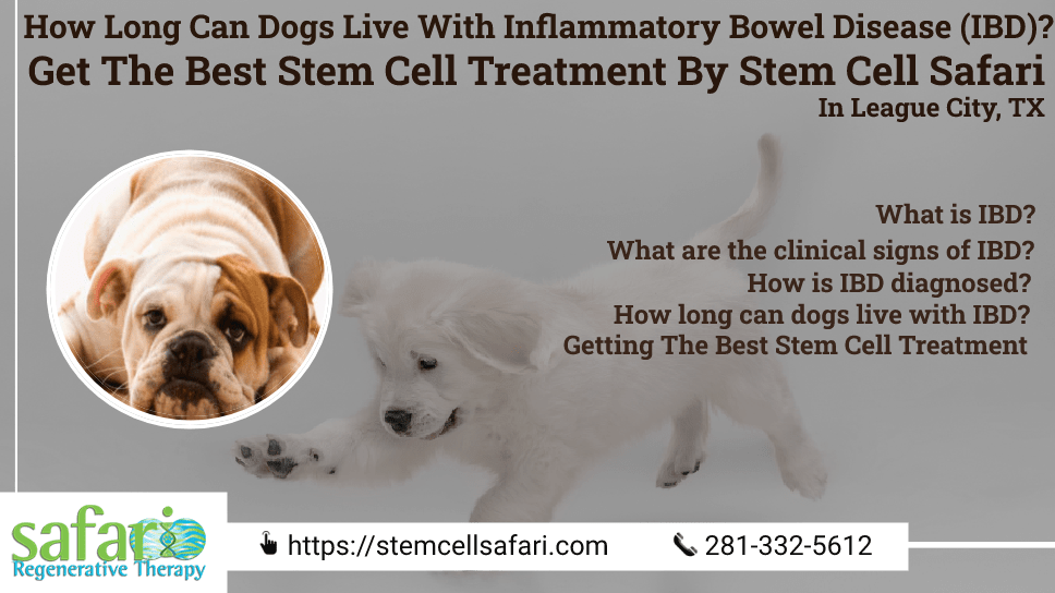 how-long-can-dogs-live-with-inflammatory-bowel-disease-ibd-get-the-best-stem-cell-treatment-by-stem-cell-safari-in-league-city-tx