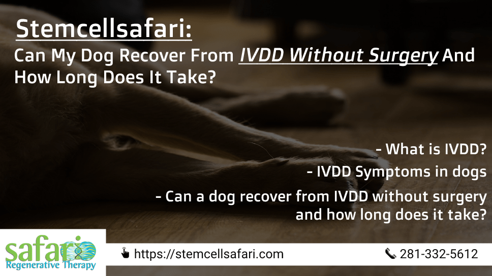 stemcellsafari-can-my-dog-recover-from-ivdd-without-surgery-and-how-long-does-it-take