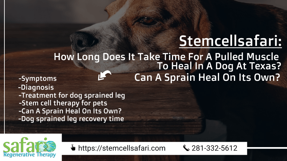 stemcellsafari-how-long-does-it-take-time-for-a-pulled-muscle-to-heal-in-a-dog-at-texas-can-a-sprain-heal-on-its-own