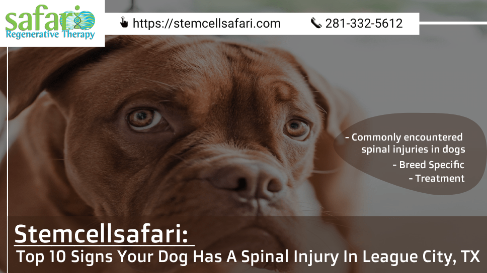 stemcellsafari-top-10-signs-your-dog-has-a-spinal-injury-in-league-city-tx